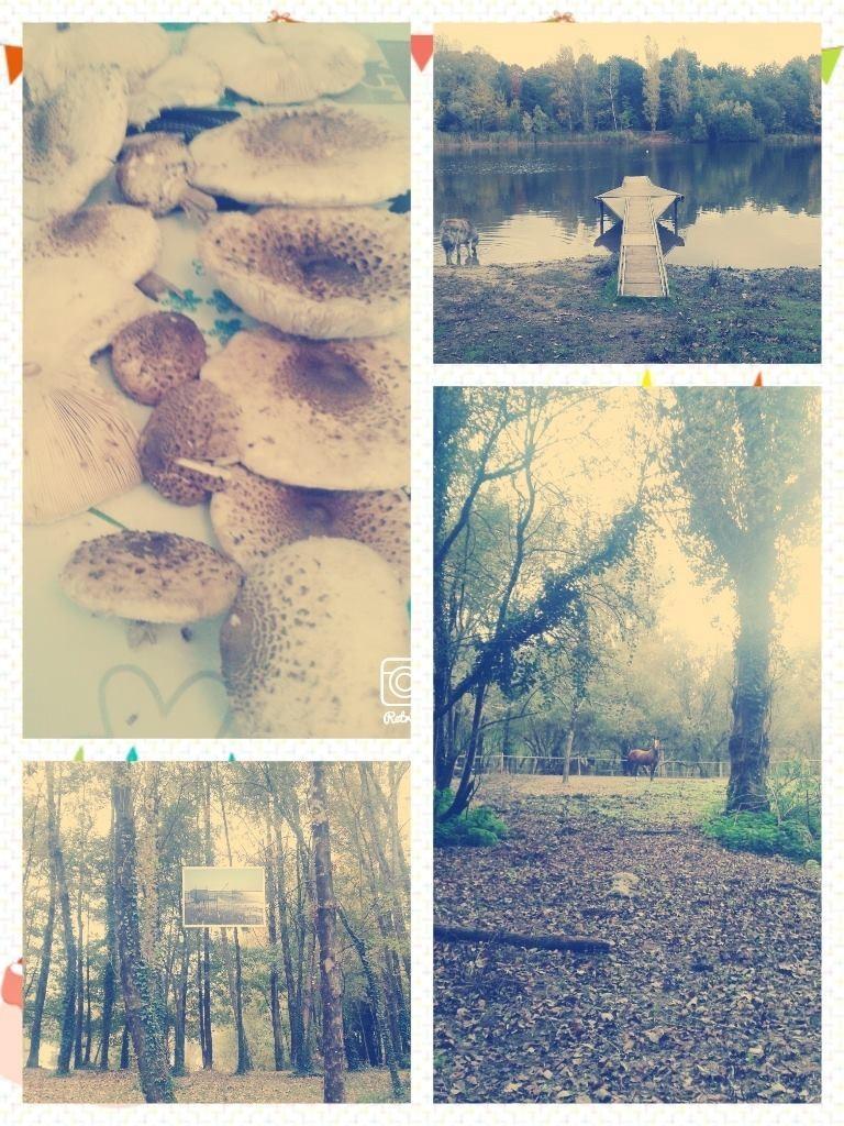 lacs du moulin blanc
